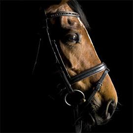 feeding-older-horses-download