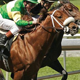 Optimise horse training